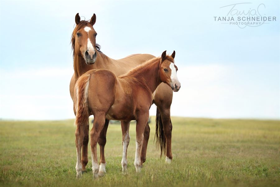 Photo credit to Tanja Schneider Photography