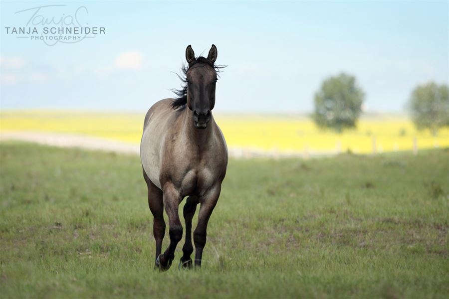 2 years old  Photo credit to Tanja Schneider Photography