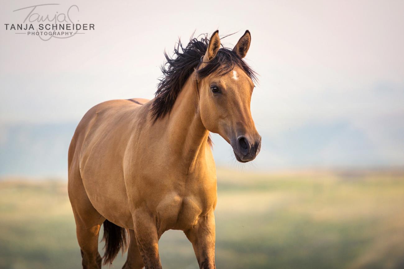 Rugged Lark Quarter Horse Rug Agar