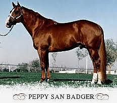 Peppy San Badger, Sire. 